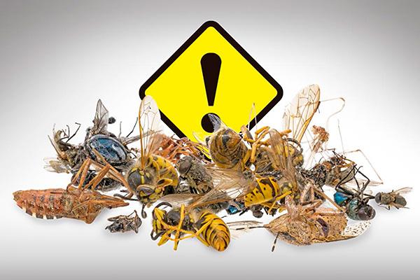 Posible colapso ambiental por disminución de poblaciones de insectos, alerta universitario