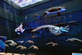 UNIVERSUM inicia su renovación con las Salas Océano y Hábitat