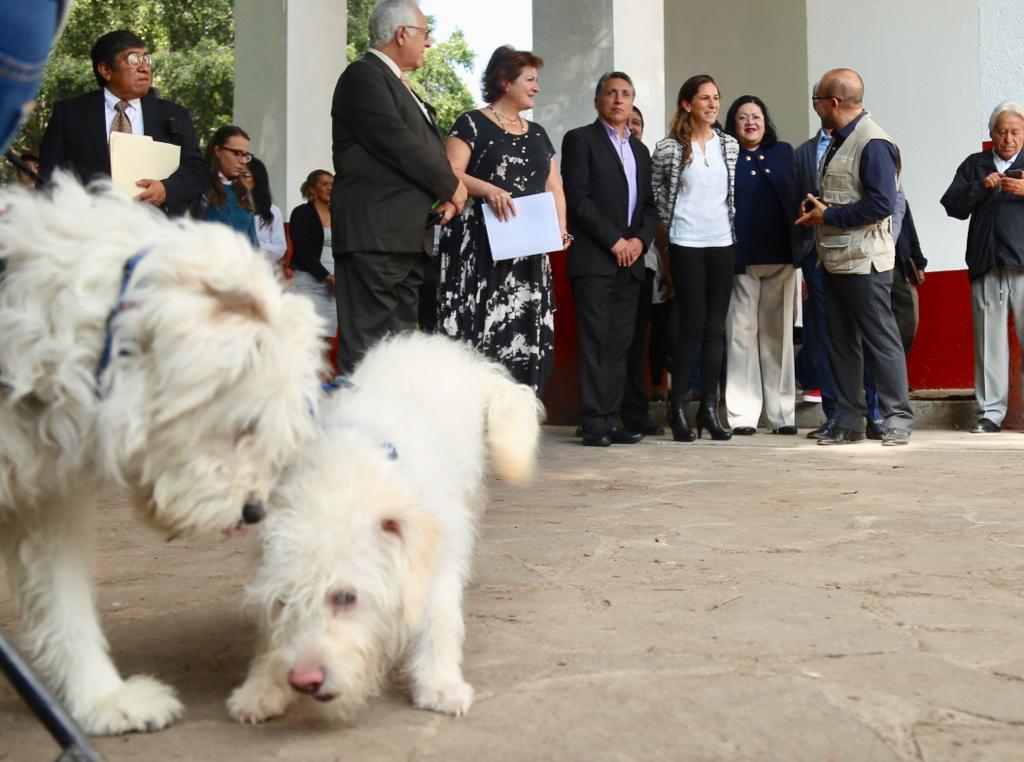 Inicia en Coyoacán Jornada de Bienestar Animal