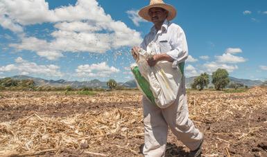 Reporta Agricultura ejercicio del 96.6% del monto presupuestal disponible al tercer trimestre del año