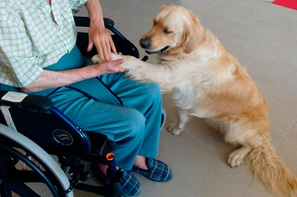 Animales de compañía, benéficos para los adultos mayores