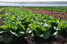Aprueba el Congreso de la CDMX utilización de pesticidas y plaguicidas orgánicos