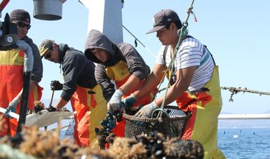 Dan a conocer a ganadores del Premio a la Pesca y Acuacultura Sustentables 2019