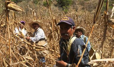 Defensa de derechos, territorios de ejidos, comunidades y pueblos originarios, pilares de la Política Nacional Agraria