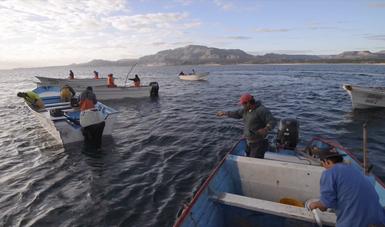 Actualiza Agricultura proyecto de modificación de NOM que determina procedimiento para establecer zonas de refugio para recursos pesqueros