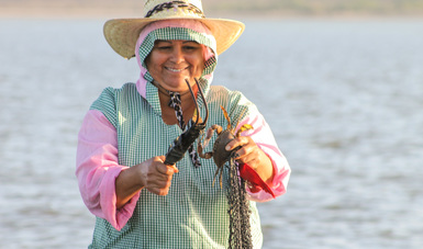 Publica Agricultura Proyecto de modificación de NOM para tallas mínimas de captura de jaiba en el océano Pacífico y el Golfo de California