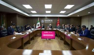 Iniciará México exportación de mora azul a China en la modalidad tierra mar