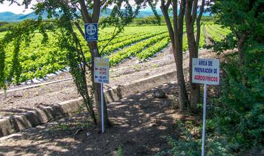 Capacita Agricultura a técnicos y especialistas en el buen uso de plaguicidas
