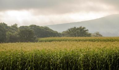 Emite Agricultura declaratoria  de desastre natural en el sector agrícola, pecuario, acuícola y pesquero de municipios de Sonora