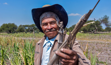 Ante efectos climáticos, impulsa Agricultura, a través del programa MasAgro, una producción agrícola sustentable
