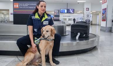 Resguardan más de 100 binomios caninos del Senasica el patrimonio agroalimentario de México