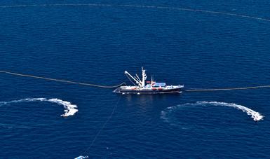 Inicia temporada de pesca de atún en el océano Pacífico