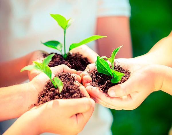 La educación ambiental, útil para una ciudadanía planetaria