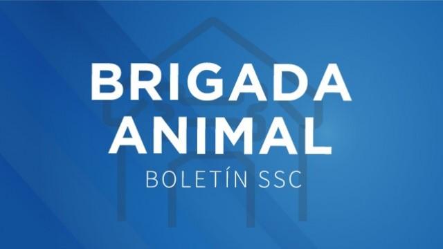 La Brigada de Vigilancia Animal de la SSC rescató a un gato que estaba atrapado en la copa de un árbol de 15 metros de altura