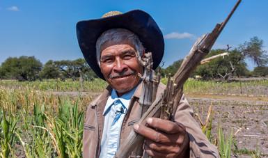Promueven Agricultura y CIMMYT alternativas agronómicas para el manejo del rastrojo y evitar quemas agrícolas