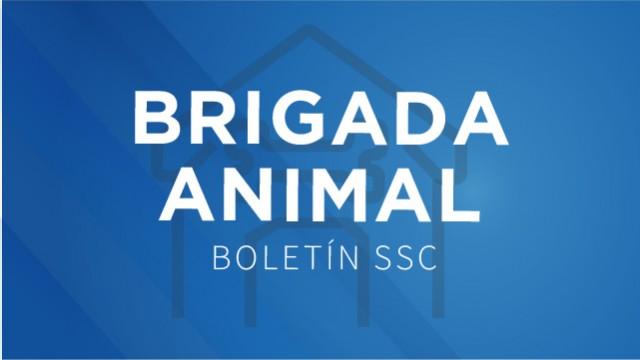 La Brigada de Vigilancia Animal de la SSC, rescató a un tecolote en la alcaldía Miguel Hidalgo