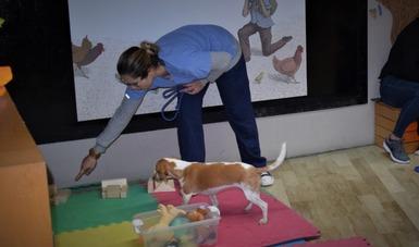 Ofrecerá el CECUT nuevo taller para mascotas