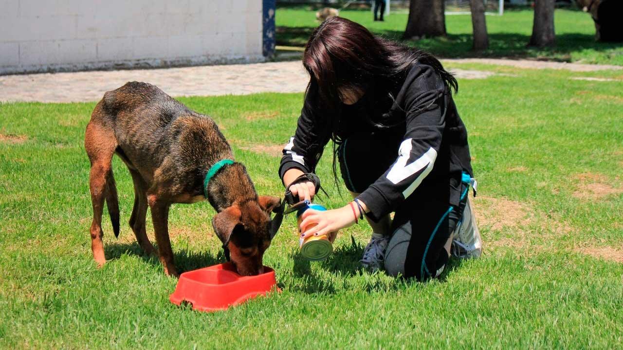 Brigada de Vigilancia Animal refuerza programa de adopción para mejorar el bienestar de perros y gatos