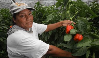 Superó comercio agroalimentario México-EU 50 mil mdd en 2019