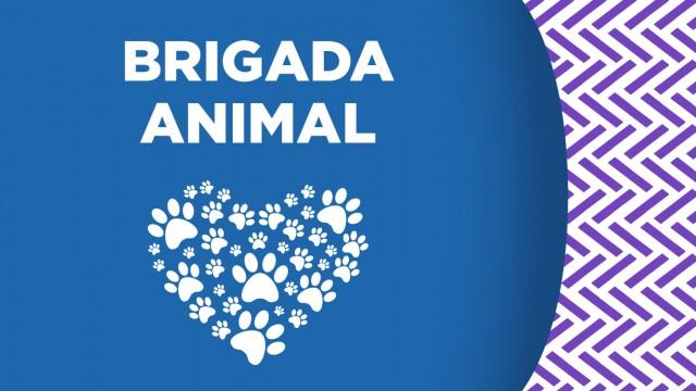 La SSC, a través de la Brigada de Vigilancia Animal, rescató a un tlacuache atrapado entre las bardas de un domicilio en Gustavo A. Madero