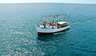 Acuerdan autoridades pesqueras y productores instalar Comité de ordenamiento y manejo de la pesquería del camarón en el océano Pacífico