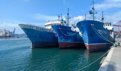 Emprenden recuperación de ecosistema marino con arrecifes artificiales