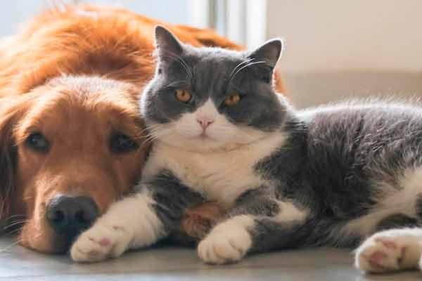Juegos mentales, opción para entretener a animales de compañía en casa