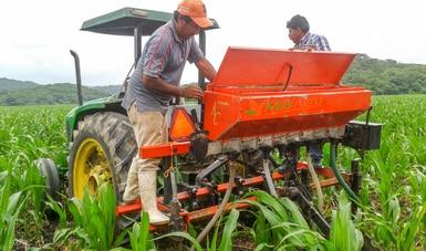 Destaca publicación científica aportaciones del MasAgro como relevantes para la agricultura mundial