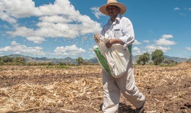 Responde Agricultura al llamado de líderes globales para asegurar disponibilidad de alimentos