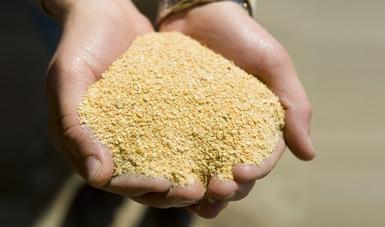 Exportan productores mexicanos más de 140 mil toneladas de harinas y aceites de pescado en 2019