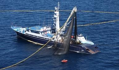 Establecen tres mil 268 toneladas como cuota de captura de atún aleta azul a embarcaciones mexicanas en el océano Pacífico