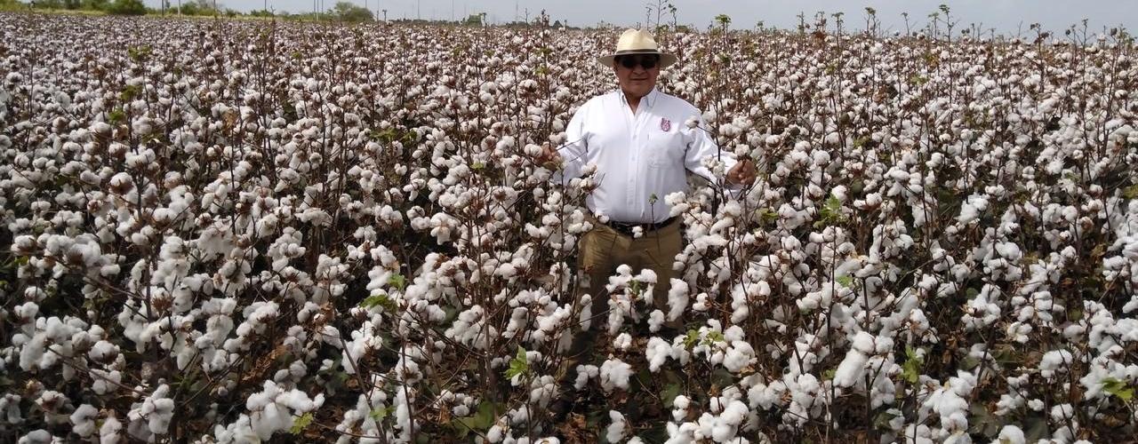 Desarrolla IPN biofungicida que elimina hongos patógenos en cultivos de maíz, sorgo y algodón