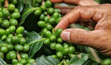 Trabaja Gobierno de México para alcanzar la soberanía alimentaria mediante un sistema justo, saludable y sustentable