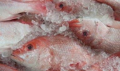 Retiene Conapesca, de manera precautoria, 178.8 toneladas de producto pesquero durante abril