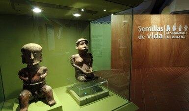 Semillas de vida… abrirá virtualmente en el Museo Regional de Historia de Colima