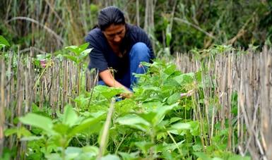 En Iniciativa Frijol para México, la clave es la integración de la cadena productiva: Agricultura