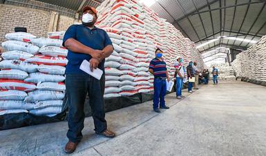 El campo no se detiene: más de 53 mil productores han recibido fertilizantes en Guerrero