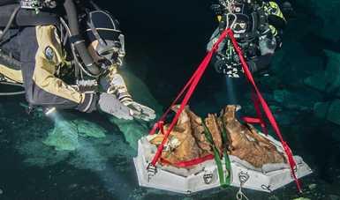 Descubren dos especies animales nuevas y recuperan el sinsacro de un perezoso terrestre gigante en Hoyo Negro, Quintana Roo