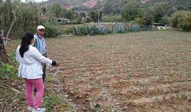 MasAgro, opción productiva para hacer frente a la desertificación