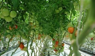 Organiza Agricultura foros virtuales sobre actualización de lineamientos para la producción orgánica
