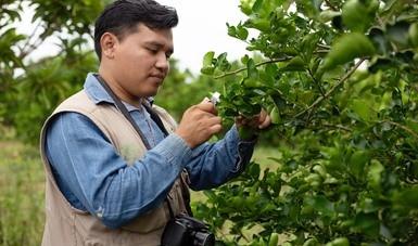 Conmemora Agricultura el 120 aniversario del inicio del manejo fitosanitario en México