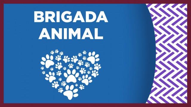 Un can que cayó en una barranca en Xochimilco fue rescatado por personal de la Brigada de Vigilancia Animal de la SSC