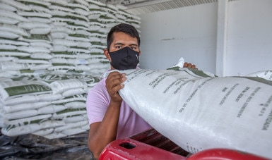 Reporta Agricultura entrega de fertilizantes a 315 mil productores de pequeña escala en el estado de Guerrero