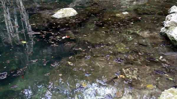 Urge reglamentar actividades humanas para proteger recursos naturales de Yucatán