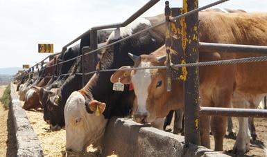 Prepara Agricultura a ganaderos de Zacatecas para exportar carne de res a China