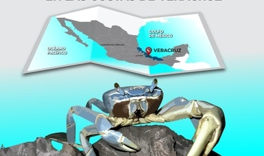 Establece Agricultura veda temporal para pesca comercial de cangrejo azul en las costas de Veracruz