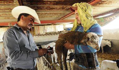 Contribuyen veterinarios mexicanos a producción y exportación de proteína animal y a fortalecer seguridad alimentaria