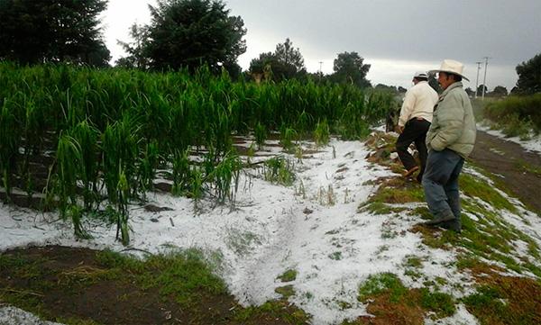 Aún sin evidencia científica, agricultores insisten en usar cañones antigranizo