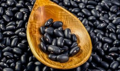 Aporta Colpos variedades mejoradas de frijol para impulsar la producción de agricultores de pequeña escala