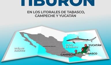 Se levanta veda de tiburón en los litorales de Tabasco, Campeche y Yucatán